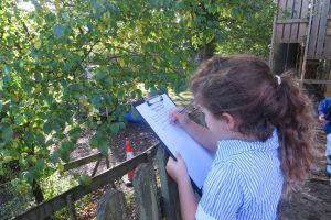 Year 12 freedom in nature poems