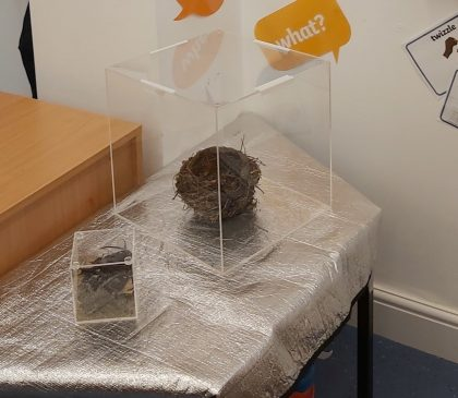 Nursery Introduce The Curiosity Cube